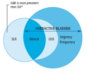 Diagram between overactive bladder and stress urinary incontinence